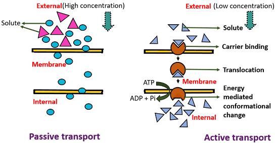 active vs passive transport