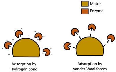 adsorption type