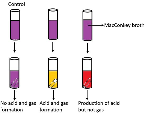 coliform test