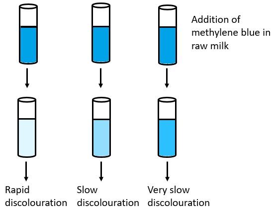 Methylene Blue Reduction Test