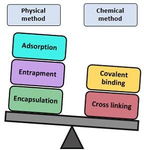 methods of immobilization