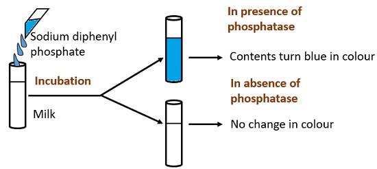 phosphatase test