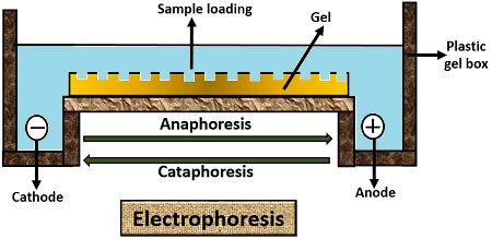 Electrophoresis diagram
