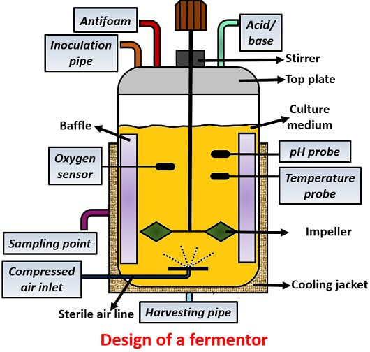 design of fermentor