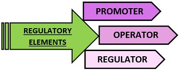 regulatory elements