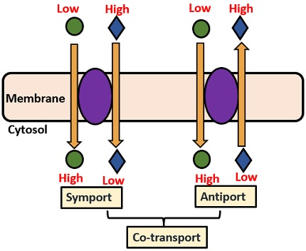 symport and antiport