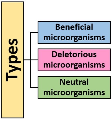 types of rhizospheric microorganisms