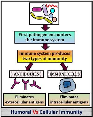 Humoral Vs Cellular immunity