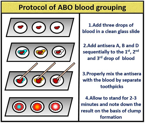 protocol of ABO blood group system