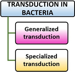 Types of transduction