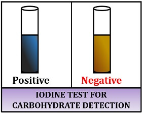 iodine test