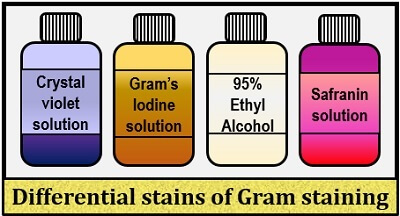 reagents of gram staining