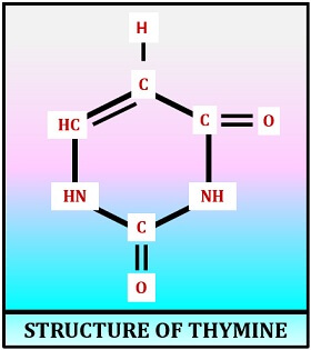 uracil structure