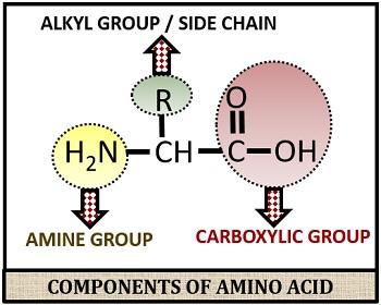 chemical formula of amino acid