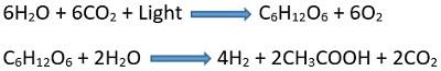 indirect photolysis