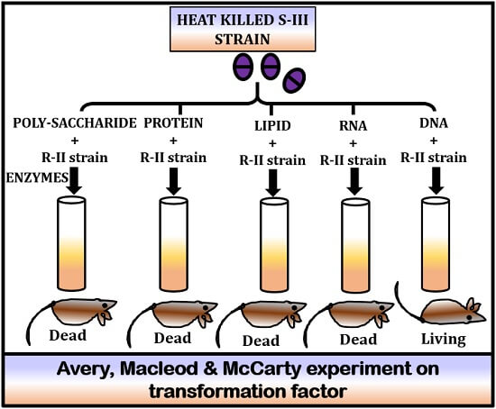 Avery, maclead and McCarty experiment