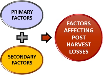 Factors affecting post harvest losses
