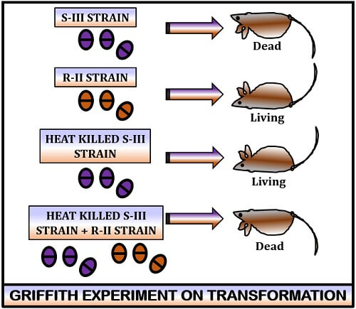Griffith experiment on transformation