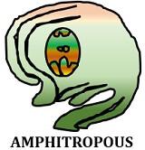 amphitropous ovule