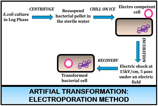 electroporation competence