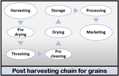 harvesting process for grains