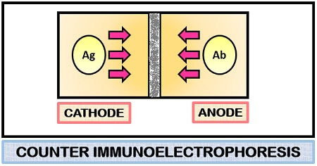 Counter immunoelectrophoresis