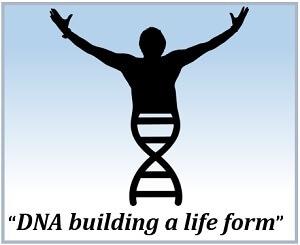 DNA building a life form