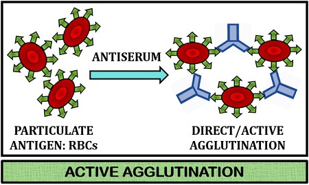 active agglutination