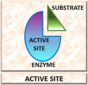 active site of an enzyme
