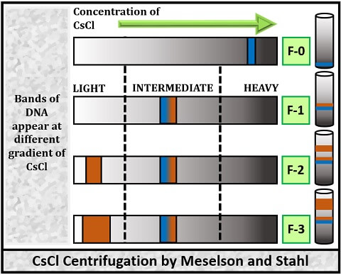 centrifugation by Meselson and stahl