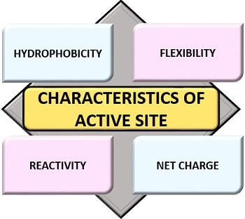 characteristics of active site of an enzyme