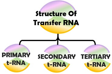 forms of t-RNA structure
