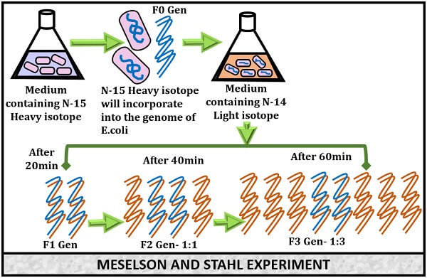 meselson and stahl experiment