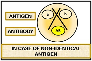 ouchterlony test case2