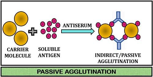 passive agglutination