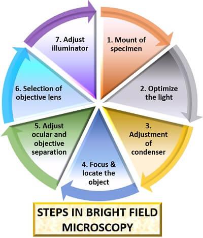 steps in bright microscopy