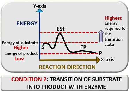 transtion reaction with enzyme