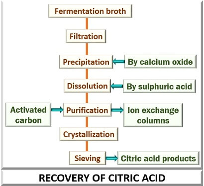 Recovery of citric acid