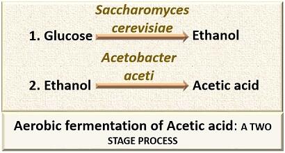 aerobic fermentation of acetic acid