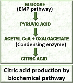biochemical production