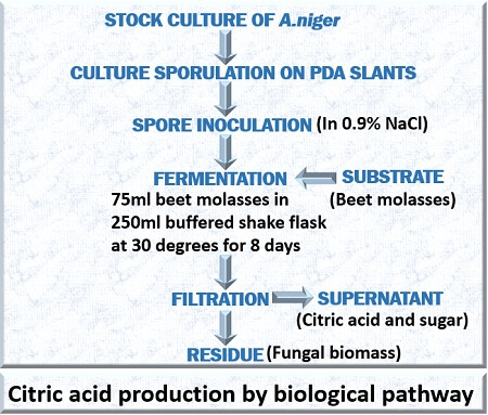 biological production of citric acid