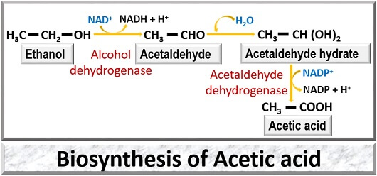 biosynthesis of acetic acid