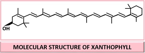 molecular structure of xanthophyll