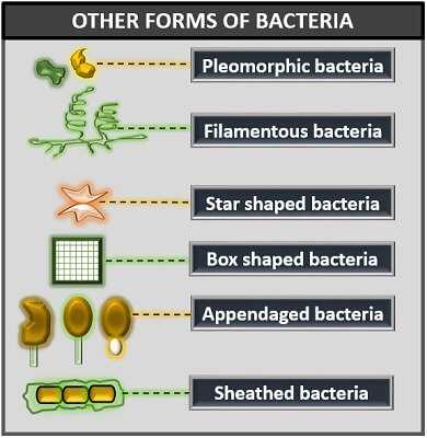 other forms of bacteria