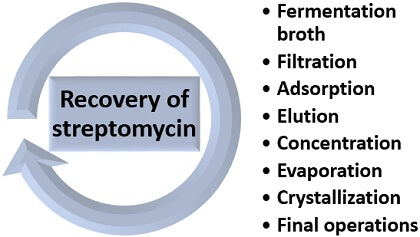 recovery steps of streptomycin