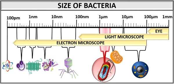 size of bacteria