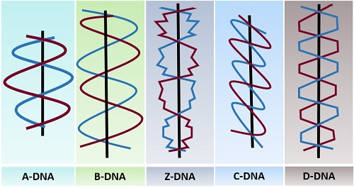 Different types of DNA