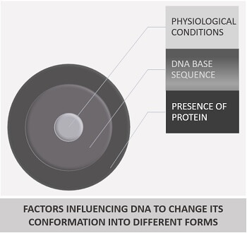 Factors influencing DNA to change its conformation