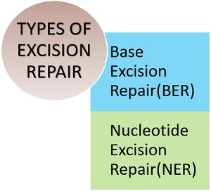 Types of Excision repair