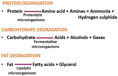 chemical degradation of fish
